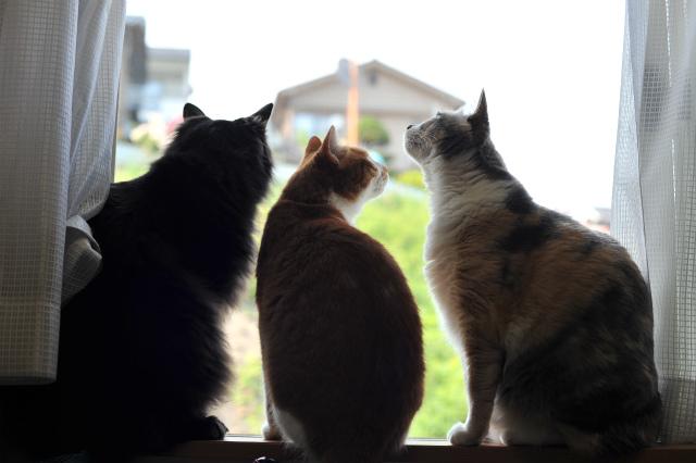 我が家の猫達のイメージ